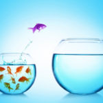 Photo of purple gold fish jumping out of small crowded fishbowl into a big empty fish bowl.